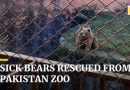 Sick brown bears saved from notorious Pakistan zoo weeks after elephant rescue