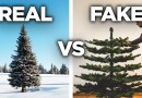 The Rise And Fall Of Real Christmas Trees – Cheddar Explains