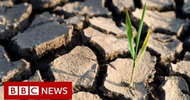 UN climate change goal now 'within reach' – BBC News