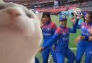 Vibing cricketers, vibing cat