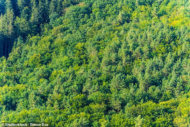 Earth's oceans and forests take up atmospheric carbon, but scientists want to investigate which forests are taking in the most, or if those forests will continue to do so  (stock image)