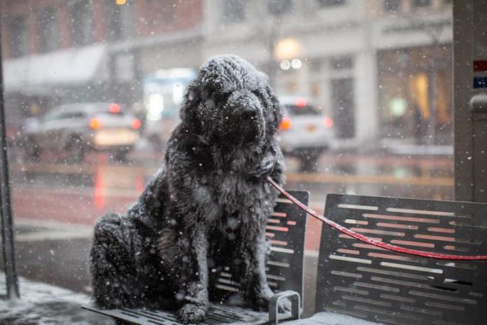 Αποτέλεσμα εικόνας για homeless chicago weather