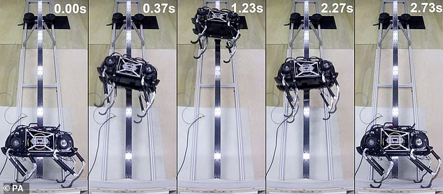 Researchers believe that SpaceBok could jump up to 6.5 feet (two metres) high in lunar gravity. Pictured: The robot hopping