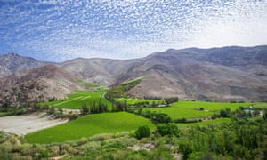 Vineyards in the Elqui valley, Vicuna, Region de Coquimbo, Chile.