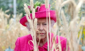 Queen in a field of wheat in Cambridge