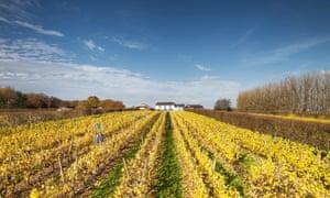Llanerch vineyard near Cardiff, Wales, UK.