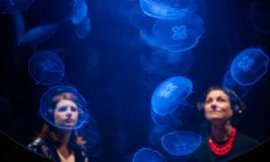 They are winning … Rimini Protokoll's immersive jellyfish installation.