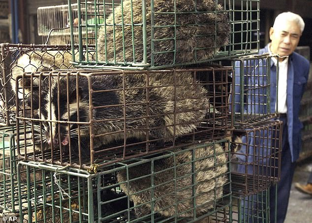 Beijing today began to discuss a proposal which is set to ban all trade and consumption of wild animals. In the file photo above,a man looks at caged civet cats in a wildlife market in Guangzhou on January 4, 2004. The cat-like creatures triggered the SARS outbreak in 2003