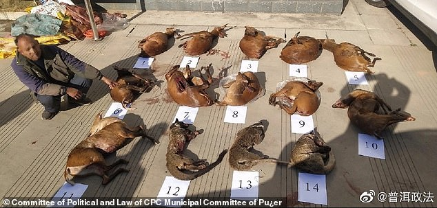 Chinese police have detained a suspected smuggler (pictured) after catching him transporting more than a dozen wild animal corpses in a nature reserve during the coronavirus outbreak