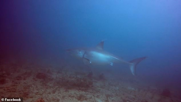 However, following their investigation, the organization discovered that this shark had not been 'known' prior to the sighting on February 11th