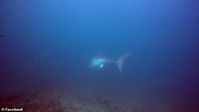 After the diver, Cocci notified the Massachusetts Division of Marine Fisheries Shark Research Program of the sighting, which scoured through its database of 120 known great whites in the area