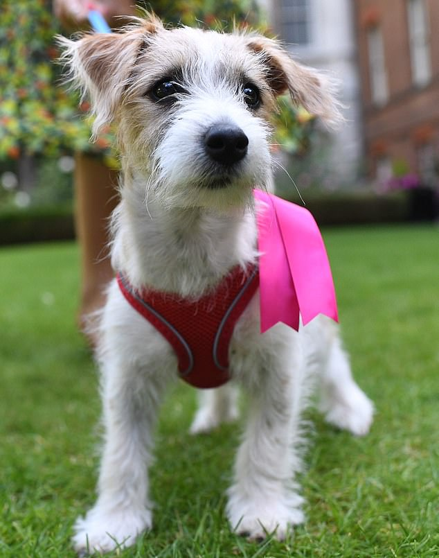 Downing Street's dog Dilyn has celebrated turning one this week and looks back on his crazy first year as the country's top dog