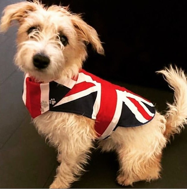 Brexit arrived on February 1 and a Dilyn was photographed wearing in a Union Jack coat to celebrate was shared on the dog's Instagram