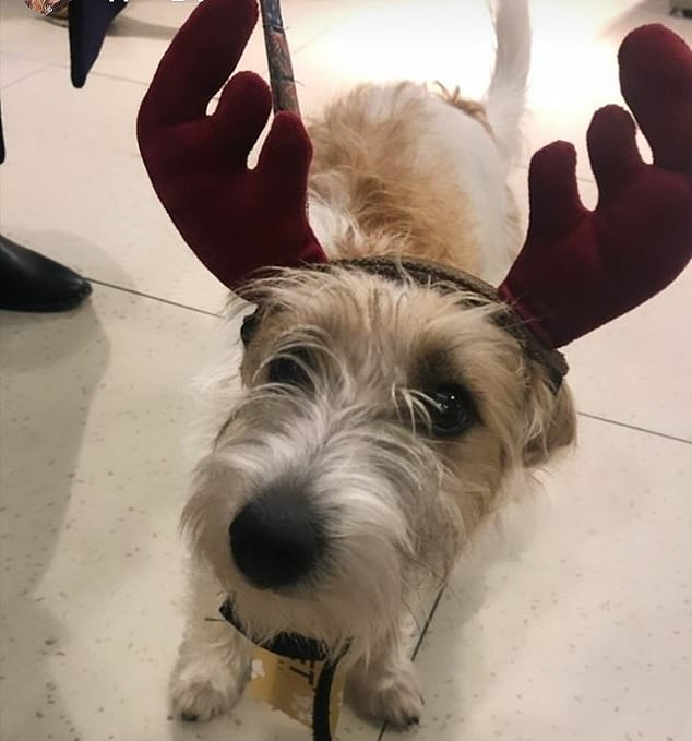 Carrie Symonds shared a photo of her dog in Christmas fancy on social media, writing 'I'm sorry Dilyn. I am a bad mother' alongside the hilarious photo