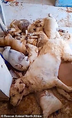 Puppies were force fed bleach and lay dead next to their mother who refused to leave them