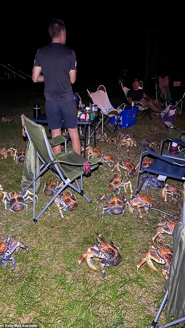 Photographs of the barbecue show more than 20 of the coconut crabs eagerly awaiting a chance to snack on some leftovers