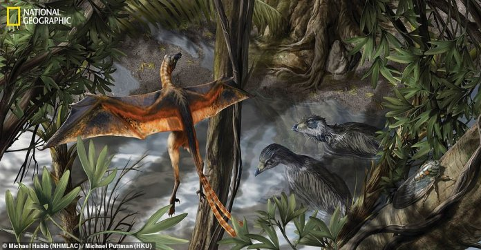 The European Synchrotron Radiation Facility, located in France, houses a particle accelerator capable of peering deep into fossils to create imagery that CT scans are unable to obtain.Dennis Voeten of Sweden's Uppsala University used the accelerator to cut through Archaeopteryx (artist impression) fossils, revealing the creature did not have the autonomy of flapping birds, but more of pheasants