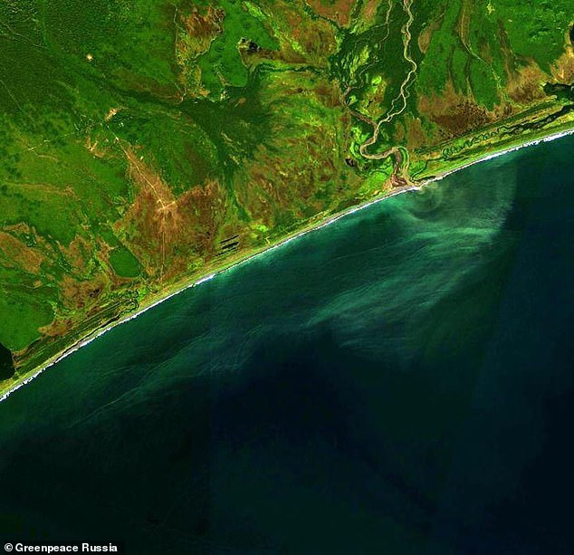 Satellite images from the beginning of September 2020 shows some yellow substance flow into the Pacific Ocean.Scientist Vladimir Burkanov, a former government official, said: 'If you look at the satellite map of this area, streams flow between Radygino and the ocean coast. 'They go out to the ocean just north of the surfers' beach'