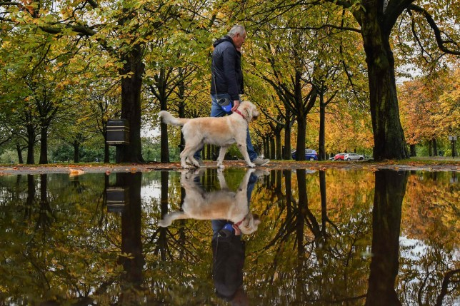 A man walks his dog under trees reflected in a puddle after rainfall in Greenwich Park