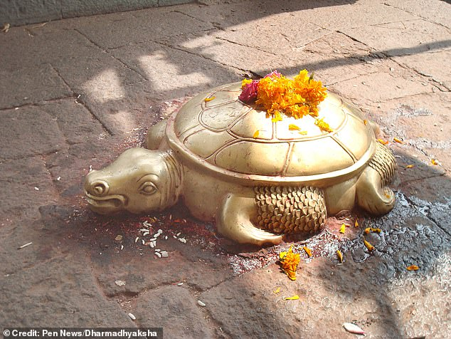 Kamal Devkota, a reptile expert who documented a similar previous find, said the reptile had a deep spiritual significance.'Not only golden animals but turtles overall have significant religious and cultural value in Nepal,' he said