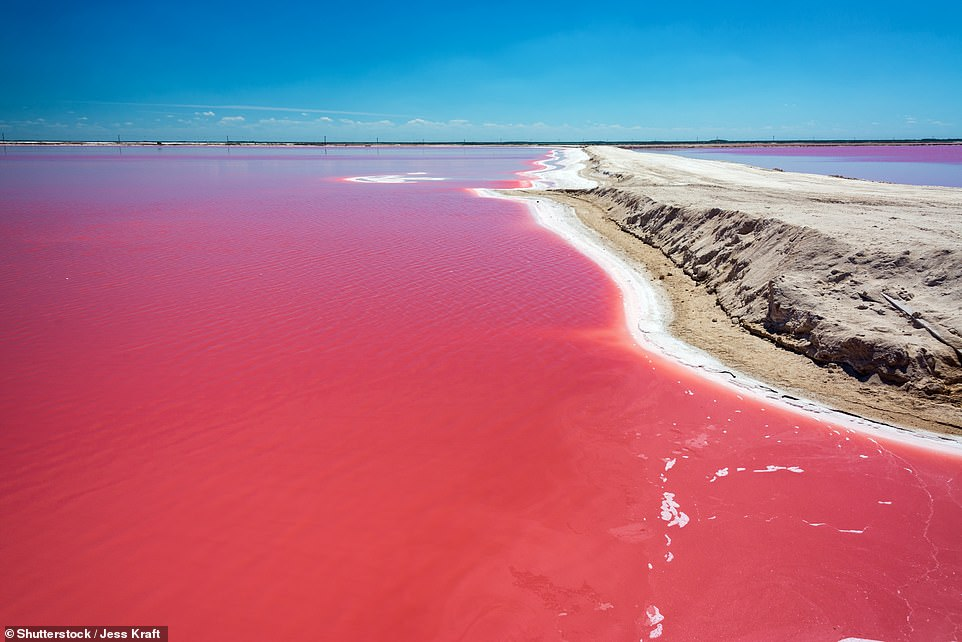 39. LAS COLORADAS, MEXICO: Known for its pink lakes, Las Colorados is described by Big 7 Travel as an 'otherworldy natural masterpiece' that is teeming with wildlife