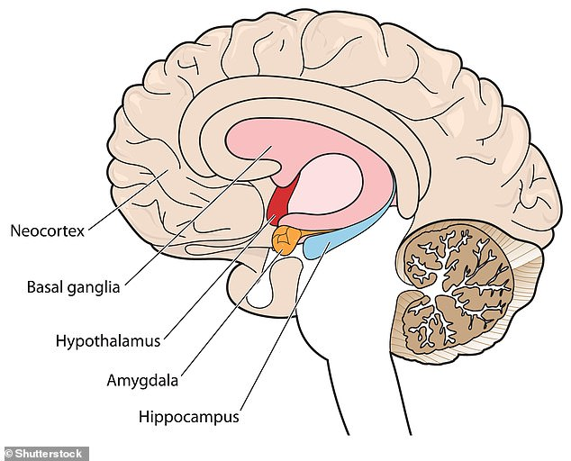 Both theories state the hippocampus is where memories are stored but the new study says they are all held in the same group of neurons