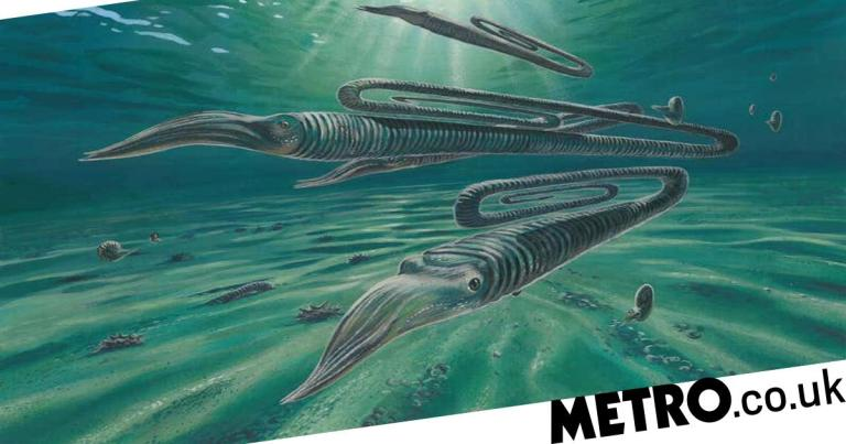 Giant 'paperclip' squid may have lived for centuries