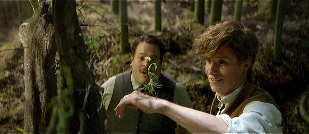Animali Fantastici e Dove Trovarli: guida alle creature di Newt Scamander