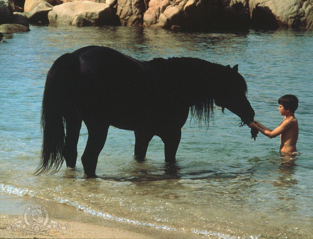 5 film sull'amicizia tra uomo e cavallo da rivedere