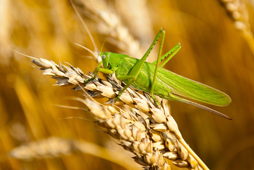 Cropeating pests plague southern Africa farmers  NewsDay Zimbabwe