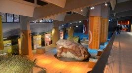 Valorizzazione del Museo del Paleolitico, lavori per oltre 400mila euro.
