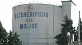 La Campagna saccarifera …un lontano ricordo!!! La nota degli ex Dipendenti dello Zuccherificio del Molise.