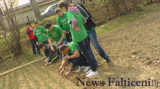 Falticeni-Eco Desire plantat 5