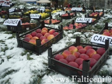 Falticeni-P1090260