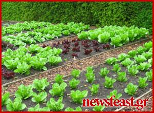 kitchen-garden-Aristotle-University-Thessaloniki-newsfeast