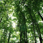 Η μισή Ελλάδα είναι δάσος
