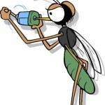 Πληροφοριοδότης κουνούπι!