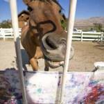 Άλογο ανοίγει την δική του έκθεση