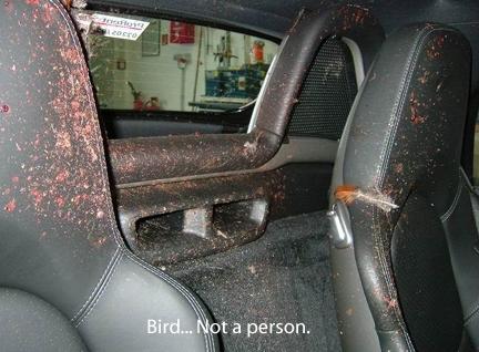 Porsche hits a bird 04