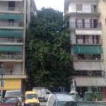 To στριμωγμένο δέντρο