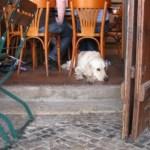 Μια καρέκλα για το σκύλο μου παρακαλώ…
