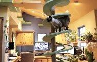 Ξόδεψε μία περιουσία και μετέτρεψε το σπίτι του σε γατό-παράδεισο!