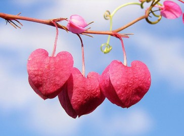 big love2