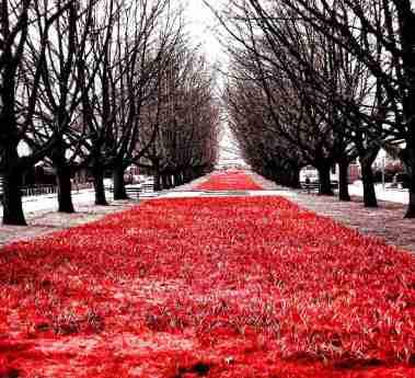eft_Red