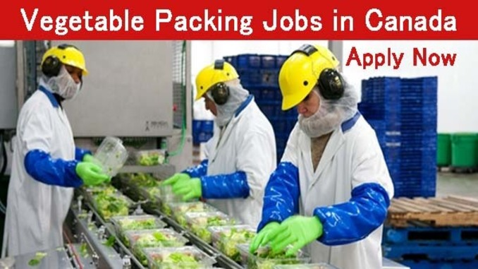 canada opens vegetable packaging jobs