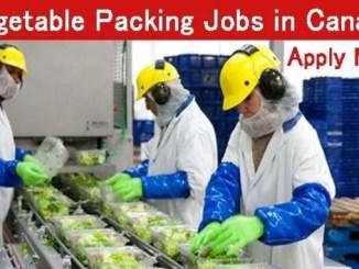 canada 2020 online jobs