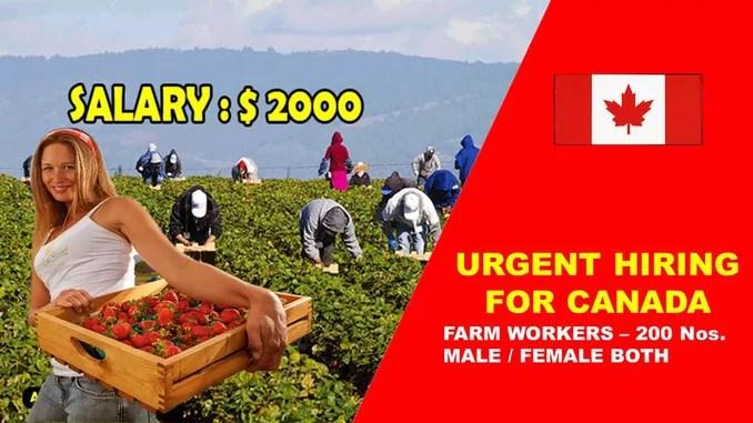 canada farm want 500 plus