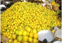 Citrus Farmers