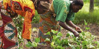 African women farmers