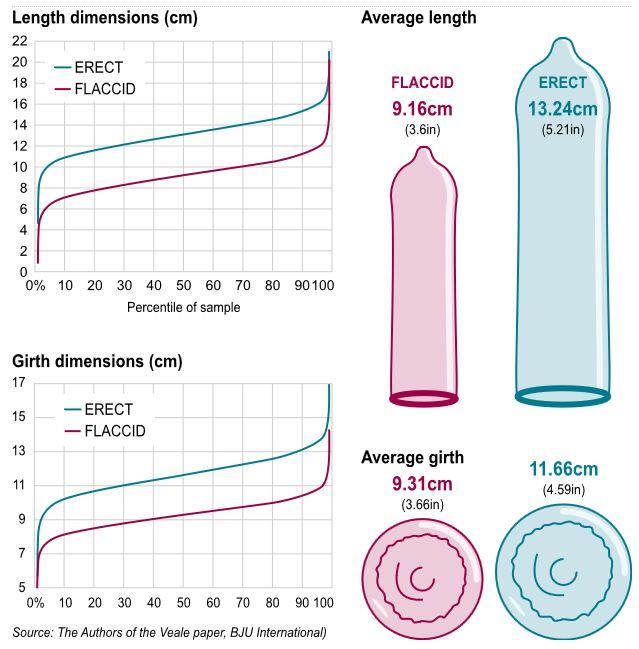 Study reveals average penis size  News Ghana